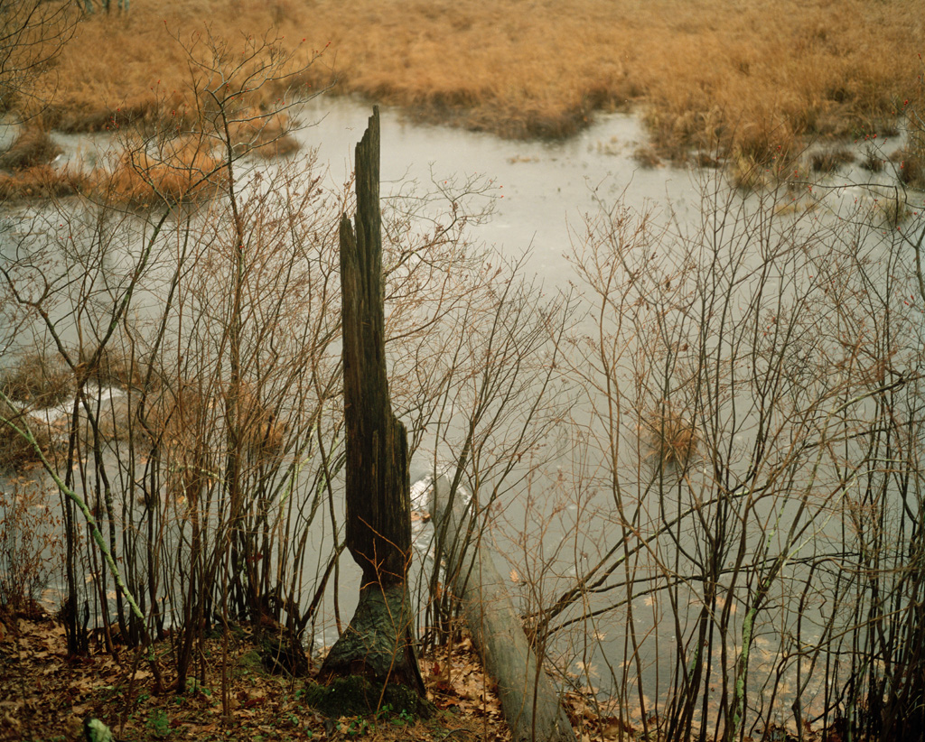 Forest Kelley, The Beaver Pond, 2009